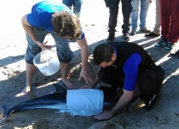 golfinho-riscado-peniche